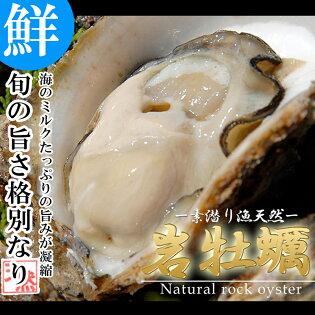 活き岩牡蠣