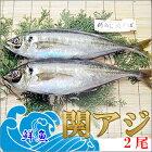 【鮮魚】一本釣り活け締め関アジ×2尾【送料無料】【関あじ/佐賀関/せきあじ/セキアジ/刺身/生】