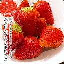 大分県産ブランドいちご ベリーツ 270g 4パック 冷蔵 苺 イチゴ