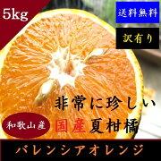 バレンシア オレンジ
