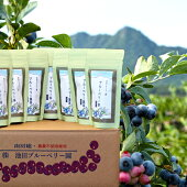 ブルーベリー葉茶7袋セット【送料無料】