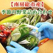 【送料無料】南房総産季節の野菜詰め合わせ採れたて新鮮野菜【グリーンアース】