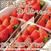 【送料無料】南房総市産いちご苺完熟いちご紅ほっぺおいCベリーやよい姫かおりの恋みのり2品種食べ比べ280g前後x4パック【グリーンアース】