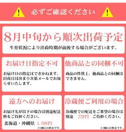 【送料無料】愛媛県内子町産ぶどう竹内巨峰園の朝採り訳あり巨峰2kg(加工用)