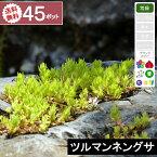 【45ポット】【送料無料】「ツルマンネングサ」 幅10〜15cm程度 ポット苗直径9cm