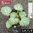【5ポット】ユキノシタ 幅10cm〜15cm程度 ポット直径...