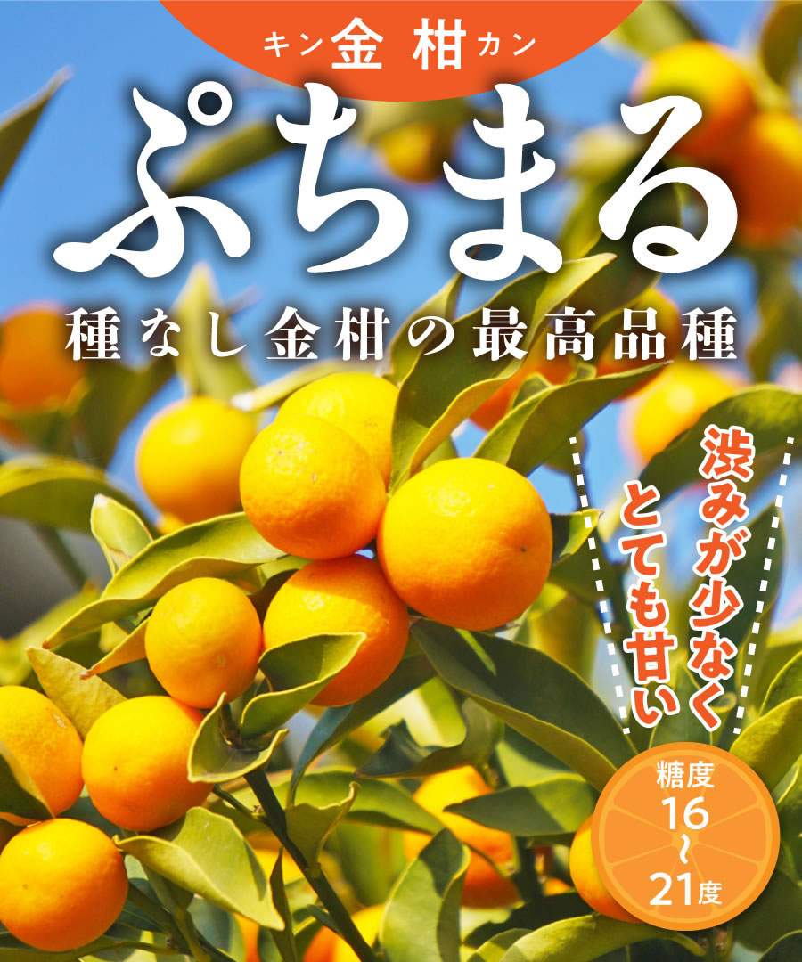 苗物, 果物の苗物  2 70cm1.0m