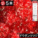 ◆送料無料◆【5本】 ドウダンツツジ 樹高30cm〜50cm◆枯れ保証付き