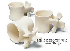 大幅値下げ!【感謝価格】世界基準 3Bサイエンフィティック社ジャンボ腰椎マグカップ
