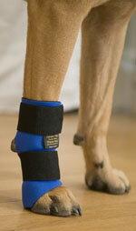 進化した犬用前脚サポーター【感謝価格】犬用前脚関節サポーター 「カルポフレックス」 【老...