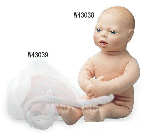 3B社 妊娠・胎児模型 成熟胎児モデル (w...