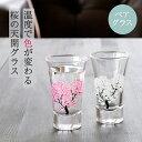 冷感桜 グラス天開ペアセット 丸モ高木陶器 酒器 グラス 冷