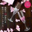 冷感桜 シャンパングラスペアセット 丸モ高木陶器 165cc