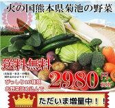 九州野菜セット 朝採れ!新鮮減農薬野菜10種類以上(葉物、根菜)野菜詰め合わせセット※野菜セット内容は店長お任せ!【送料無料】