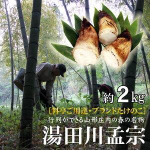 行列ができる春の特産 山形県鶴岡の「湯田川孟宗(たけのこ)朝掘り」約2kg ※配達日は指定できません