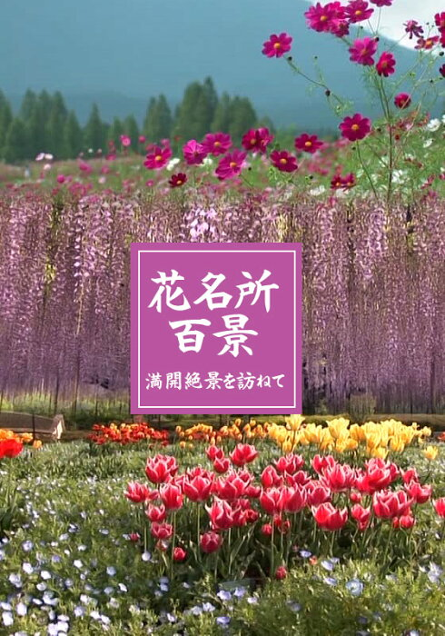 花名所百景 藤/あしかがフラワーパーク(栃木)【動画配信】
