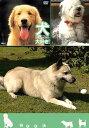 犬、大好き! とってもやんちゃなラブラドールレトリバー【動画配信】