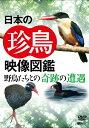 日本の珍鳥 映像図鑑 国内撮影パ...