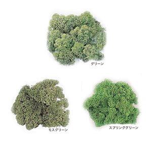 アイスランドモス   ハーバリウム 手作り 手芸 こけ コケ 苔 材料 手芸材料 苔盆栽 盆栽 グリーンインテリア グリーン インテリア インテリアグリーン おしゃれ