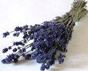 富良野ラベンダー(3号)/濃紫・ドライフラワー・花材・ハーブ