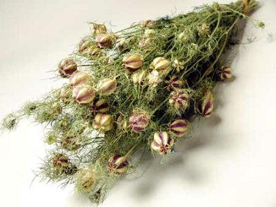 ◆ドライフラワーニゲラ/北海道産ドライフラワー・花材・リース・手作り・国産・材料・素材・ナ...