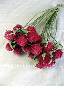 ◆ドライフラワー千日紅◆ラズベリーフィールド/北海道産ドライフラワー・花材・リース・手作り...