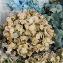 ◆ドライフラワーあじさい(アジサイ)ヘッド/北海道産ドライフラワー・花材・リース・手作り・...