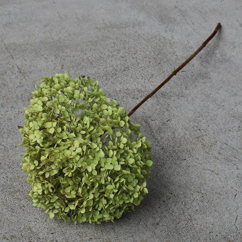 アナベル枝つき インテリア グリーン