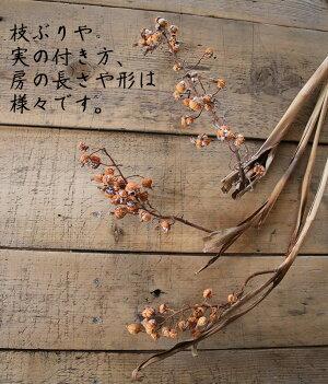 ゲットウの実・月桃の実/国産ドライフラワー花材リース手作り材料素材ナチュラルインテリアボタニカルディスプレイモダン