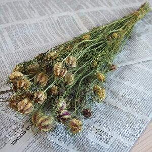 ニゲラ(クロタネソウ)/北海道産ドライフラワー花材リース手作り国産材料素材ナチュラルインテリアグリーン
