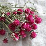 千日紅 カーマインフィールド / ピンク 北海道産ドライフラワー ナチュラル インテリア 花材 素材 材料 リース かわいい