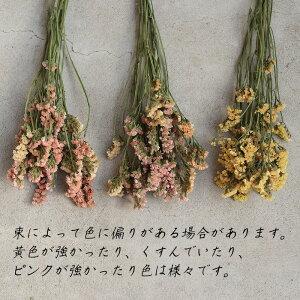 スターチスアプリコット/北海道産ドライフラワー花材リース手作り国産材料素材ナチュラルインテリアディスプレイオレンジイエローベージュ