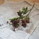 ビバーナムティナス ブラウン ◆ ドライフラワー ナチュラル 実物 木...