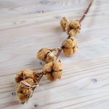 綿の実枝つき ブラウン / コットンフラワー リース 花材 クリスマス 素材 ドライフラワー 材料 綿花 テディベアコットン