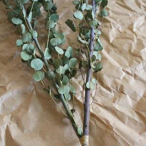 グニーユーカリ/ドライフラワー花材リース手作り材料素材ナチュラルインテリアボタニカルグリーンディスプレイ
