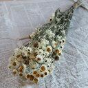 アンモビューム ドライフラワー * 北海道産 花材 リース 手作り 国産 材料 素材 ナチュラル インテリア ホワイト 白 かわいい