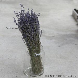 富良野産ラベンダー4号おかむらさき丘紫/北海道産ドライフラワー花材素材材料インテリアアロマリースアレンジメントインテリアディスプレイパープル