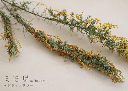 ミモザ/北海道産ドライフラワー・花材・リース・手作り・国産・材料・素材・ナチュラル・インテリア