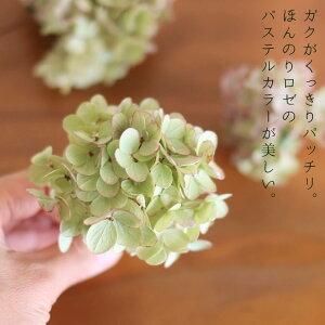 ミナヅキオータムフレイズヘッド【少量パック】/ドライフラワー花材リース手作り国産材料素材ナチュラルインテリアディスプレイあじさい