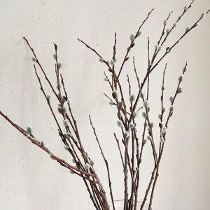【大枝長さ50〜70cm】ドライフラワー穂付きネコヤナギ(猫柳)◆ブラウンナチュラルインテリア素材材料葉物枝もの花材素材ディスプレイ