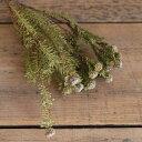 リューカデンドロン トータムフィーメル / ドライフラワー 花材 リース 手作り 材料 素材 ナチュラル インテリア ディスプレイ