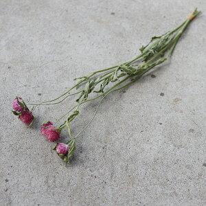 【少量パック】千日紅さくら(ピンク)/ドライフラワーナチュラルインテリア花材素材クラフト材料リースハーバリウム