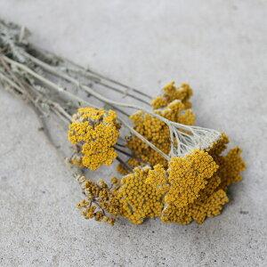 ヤロウ/北海道産ドライフラワー花材リース手作り国産材料素材ナチュラルインテリアディスプレイ