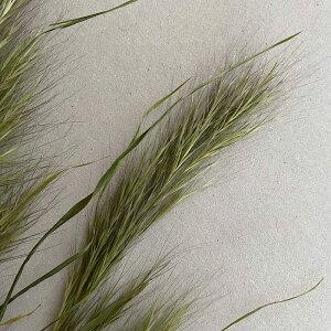 ドライフラワーブロムスグラス/北海道産ドライフラワー花材リース手作り国産材料素材ナチュラルインテリア