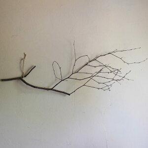 【富良野産】白樺の枝ロングブラウンドライフラワー◆ナチュラルインテリア素材材料葉物枝もの花材素材ディスプレイ北欧インテリアシンプル木の枝おしゃれ