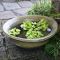 ◆送料無料◆信楽焼スイレン鉢!金魚鉢、メダカ鉢 にも最適な陶器睡蓮鉢!陶器睡蓮/鉢/すいれん...