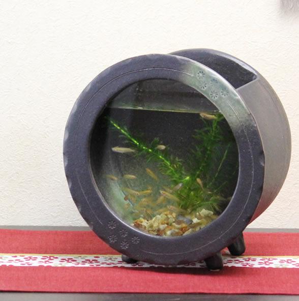 信楽焼和風おしゃれ水槽陶器水槽陶器とガラスがコラボインテリア水槽金魚鉢メダカ鉢陶器水鉢めだか鉢金魚鉢鉢はす鉢睡蓮鉢su-0123
