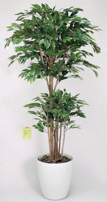 【送料無料♪】トロピカルベンジャミン (人工観葉植物) 高さ160cm 光触媒 (161A380) 【人工観葉植物・造花・フェイクグリーン/フロア(鉢型)用 人工観葉植物(光触媒 )】:サインモール