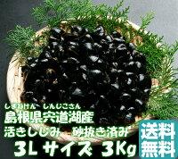 島根県宍道湖産大和しじみ(活き)3Lサイズ3Kg