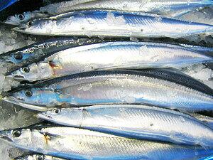 北海道の生サンマ(L)2kg13尾(1尾150-160g)【9月下旬発送開始】【送料無料】さんま 秋刀魚